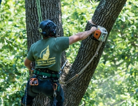 tree trimming pruning care stump removal harrisburg pa