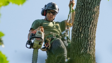 Harrisburg PA tree removal tree trimming arborist stump removal stump grinding Alpine Tree Experts Inc in Lewsiberry PA